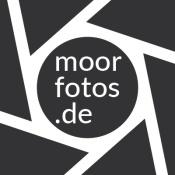 moorfotos-2019_header2