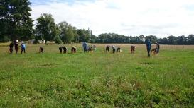 JAO-Einsatz im FÖJ -Jugendliche bei der Bekämpfung von Jacobs-Kreuzkraut